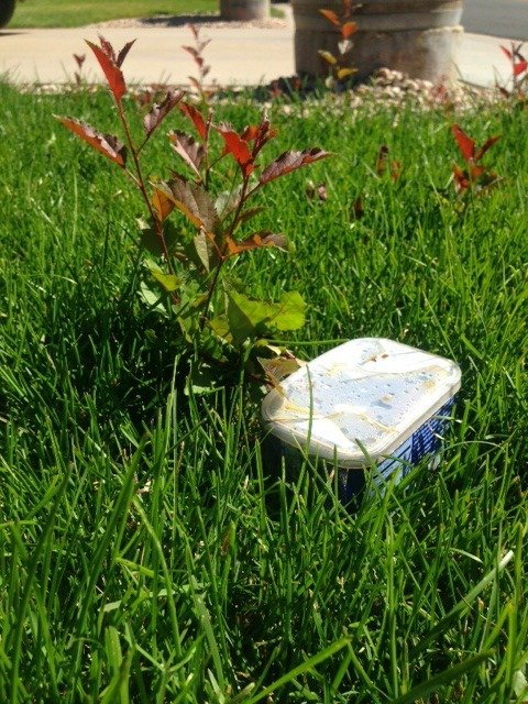 Heather Vs The Crabapple Tree Volume I Just A Colorado Gal