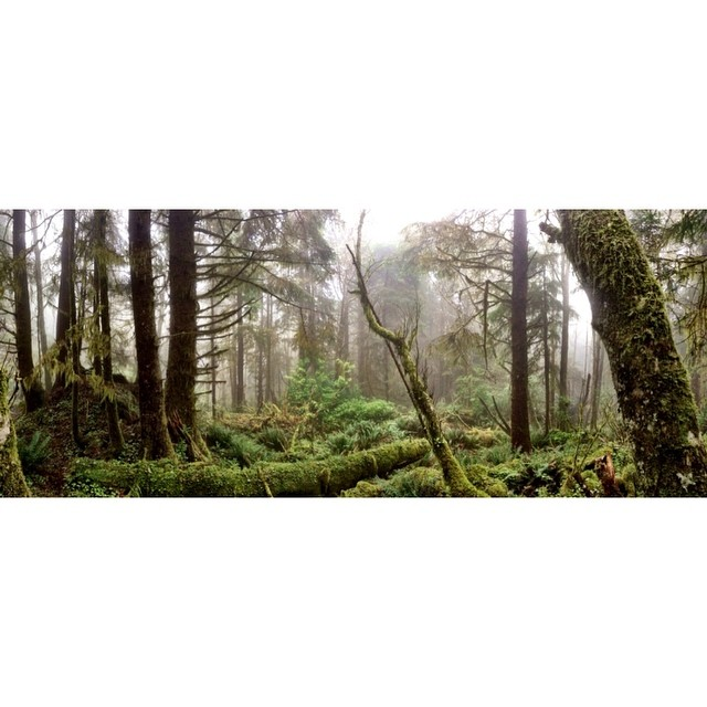 A real-life Fern Gully! ?Ok, that's a lie, but hiking through the coastal forests of #Oregon last week was definitely a surreal experience! ?
