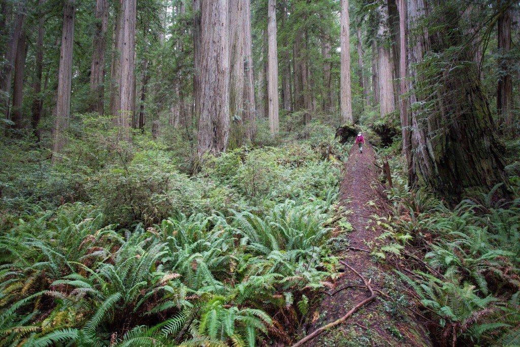 Jedediah Smith Redwoods
