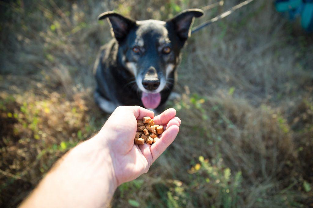 20160814dogfood51