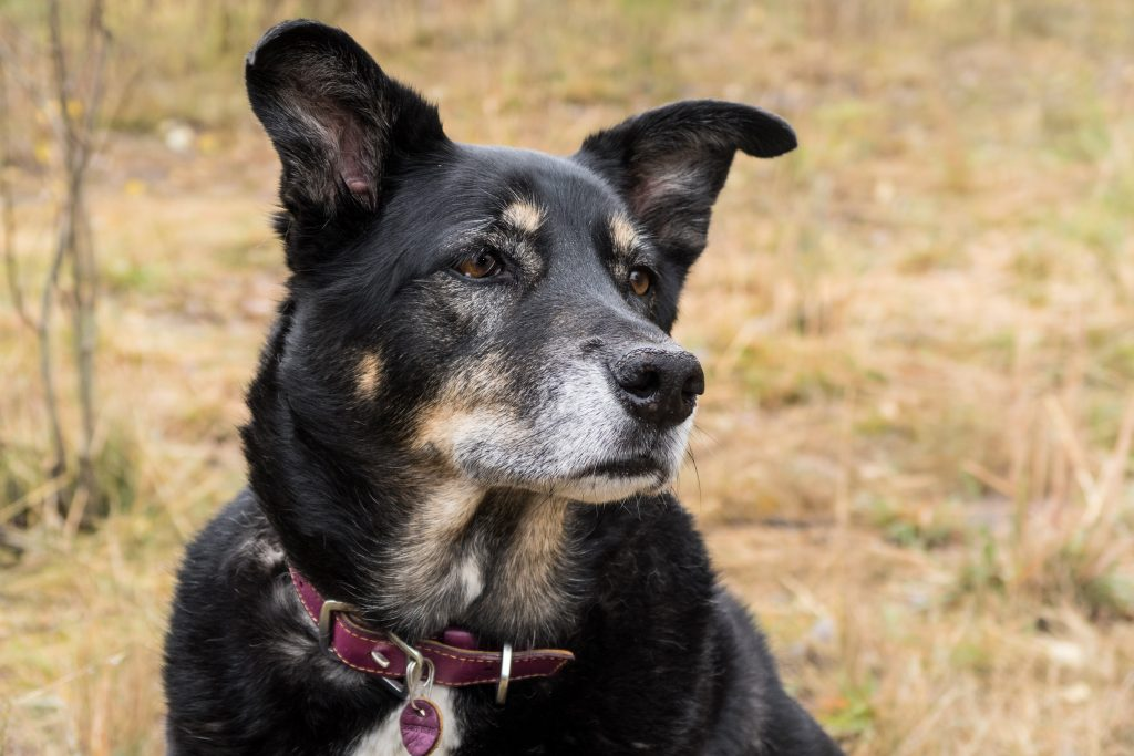 Estes Park: Dog-Friendly Hiking -