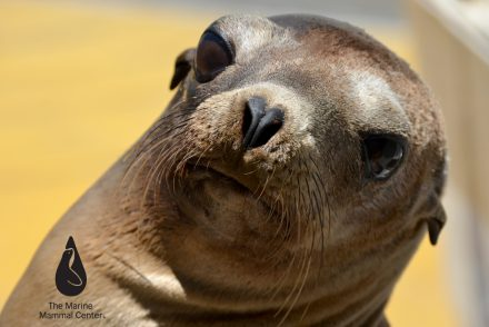 10_tmmc-sea-lion-patient-%c2%ac-ingrid-overgard